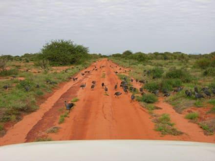 Macht die Straße frei! - Tsavo Ost Nationalpark