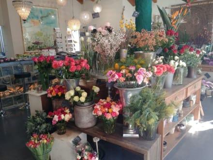 Gärtnerei Greiner Der Blumenladen In Schorndorf Holidaycheck