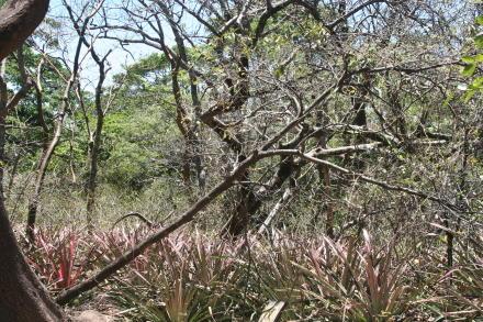 Nature reserve/Zoo - Rincon de la Vieja National Park