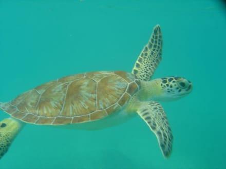 Turtle Bay - Turtle Bay