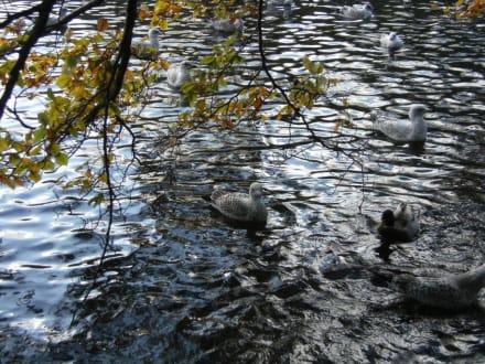 Vögel - Park St. Stephens Green