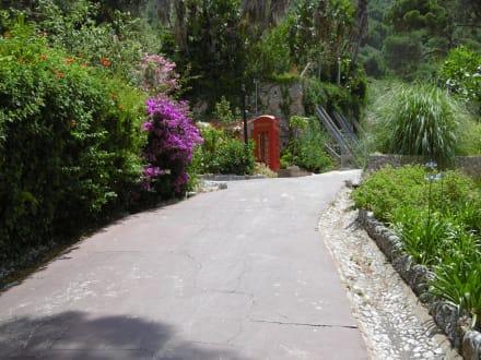 botanischer garten the alameda in gibraltar holidaycheck. Black Bedroom Furniture Sets. Home Design Ideas