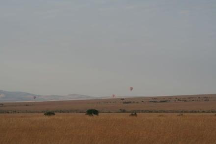 das große Fressen - Masai Mara Safari