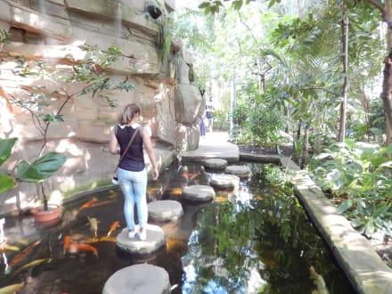 Bilder Botanischer Garten Reisetipps