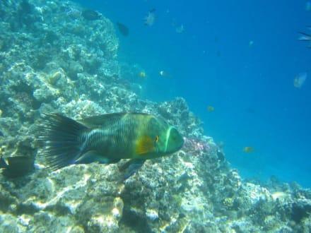 fisch im wasser - Tauchen Makadi Bay