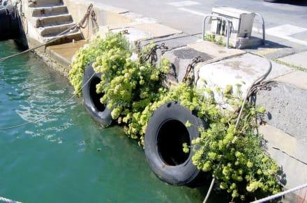 Hafenkai in Port Vendres - Port Vendres