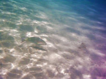 Unter Wasser - Schnorcheln Makadi Bay