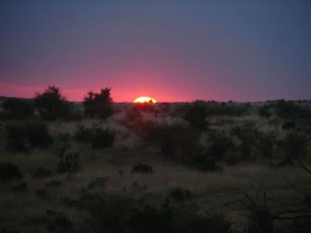 Sonnenuntergang in der Mara - Masai Mara Safari