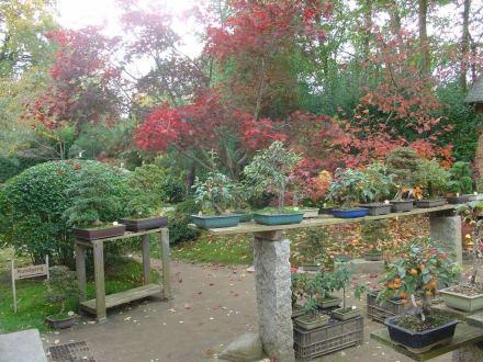 Herbst - Bonsaigarten Ferch