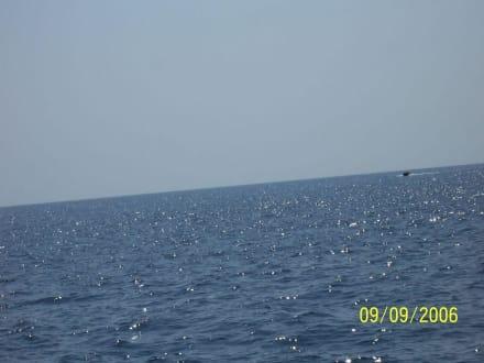 Meer - Glasbodenboot Tour Starfish Porto Colom