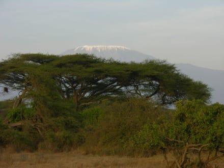 Blick auf Kilimanjaro - Kimana Reservat