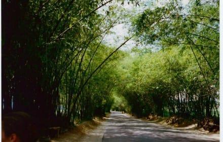 Bamboo Avenue - Bamboo Avenue (Bambusallee)