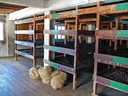 Muskat-Nuss Lagerung - Muskatnussfabrik in Gouyave