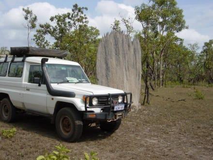 Termitenbau - Litchfield National Park