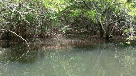 Mangroven - Jeep Safari