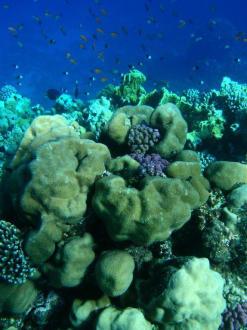 Unterwasserwelt 8 - Tauchen Marsa Alam