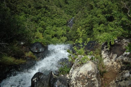 Black River Nationalpark - Black River Gorges National Park