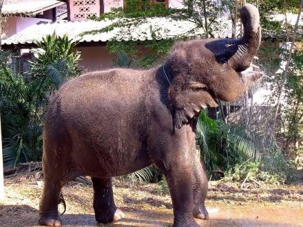 Eli beim Duschen - Elefantenreiten Chiang Mai