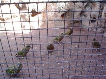 kleine Papageien - Loro Parque