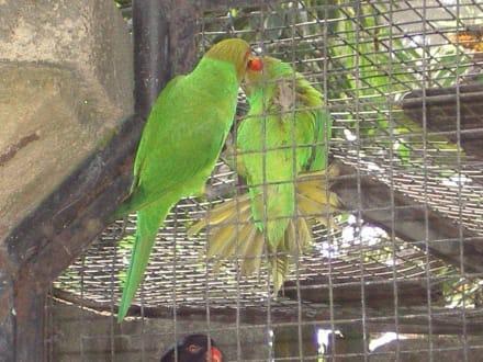 Vogelpark - Bali Bird Park