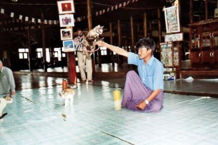 Gewaltiger Katzensprung - Tempel der springenden Katzen