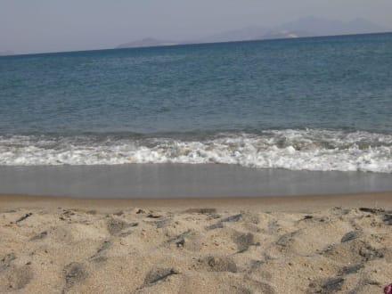 Sunny Beach - Sunny Beach