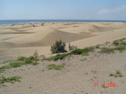 Dünen in Gran Canarien - Dünen von Maspalomas