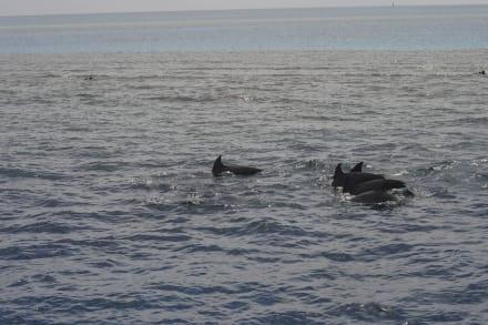 Delfine beim Ausflug - Delfinschwimmen Delfine & Meer