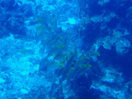 U-Boot Atlantis - U-Boot Tour Atlantis Isla Cozumel