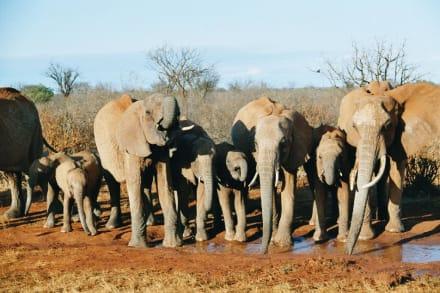 Elefanten an der Wasserstelle - Tsavo Ost Nationalpark