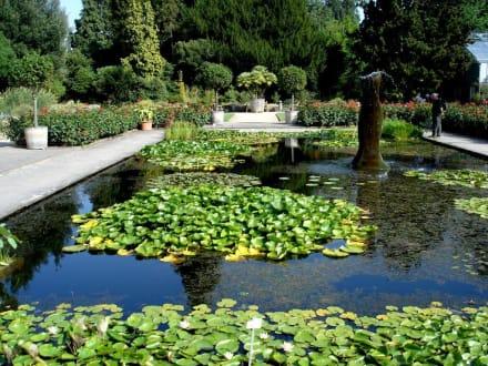 Wassergärten - Botanische Gärten der Rheinischen Friedrich-Wilhelms-Universität Bonn