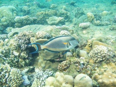 Underwater - Schnorcheln El Quseir