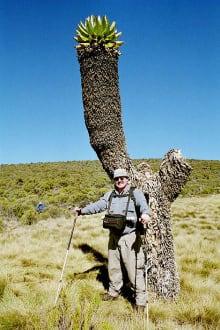 Hermann vor einem Riesen-Kreuzkraut - Kilimanjarobesteigung