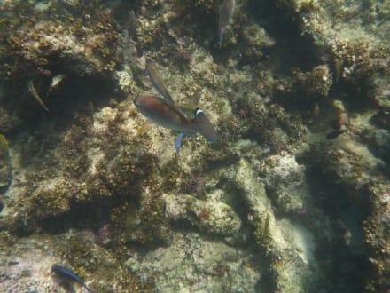 Unterwasserleben - Katamaran Tour Tropical Storm Punta Cana