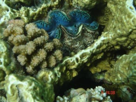 Koralle beim Ausflug Meer&Sterne - Schnorcheln Hurghada