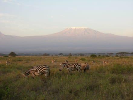 Zebras am Fuße des Kilimanjaro - Kimana Reservat