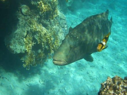 Napi - Tauchen Shark Bay