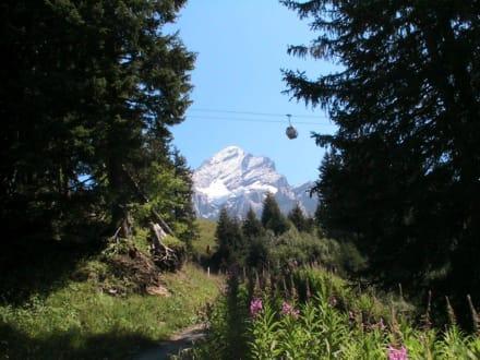Wetterhorn - Jungfraujoch