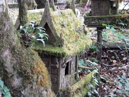 Bemoostes Häuschen - Doi-Inthanon-Nationalpark