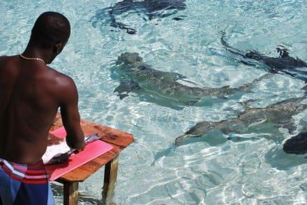 Haifütterung - Haitauchen