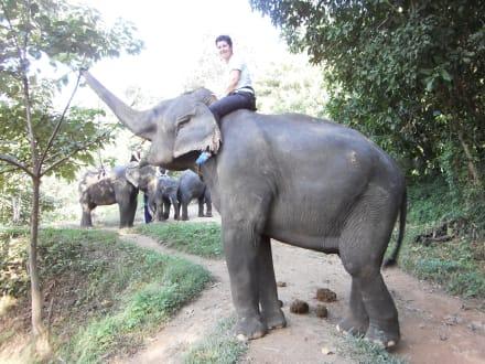 Bilder Mit Elefanten Dame Natalie 50 J auf einem Trekking