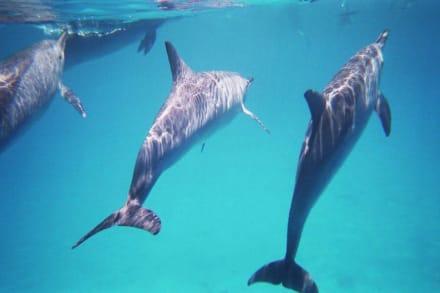 Delphine - Dolphin House