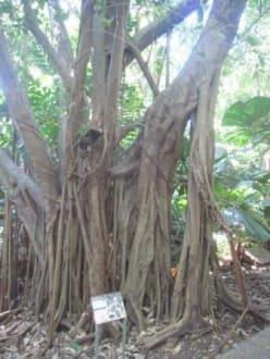 Nature reserve/Zoo - George Brown Darwin Botanical Gardens