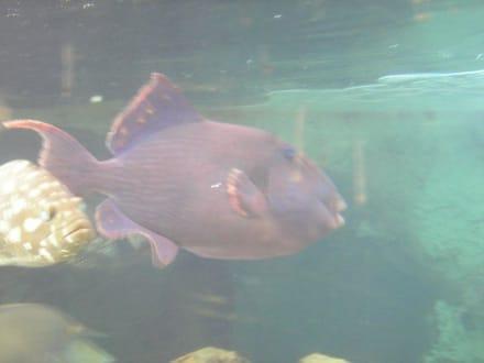 Fisch durch die Scheibe gesehen - Sindbad Submarine