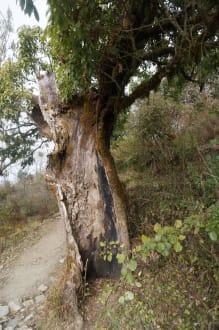 Sonstiges Landschaftmotiv - Annapurna Region