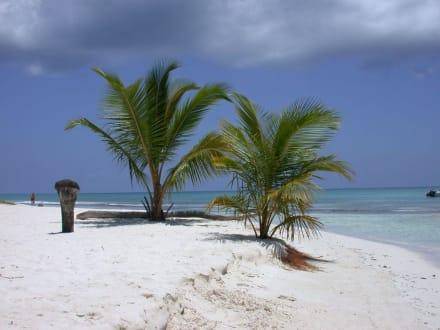 Ausflug Insel Saona - Isla Saona