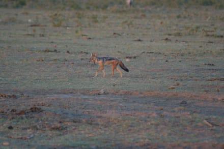 Naturreservat/Zoo - Amboseli Nationalpark
