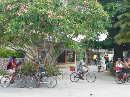 Ortskern von La Digue - Radfahren La Digue