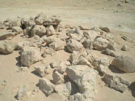 Fossilien aus der Vorzeit - Quad Tour El Gouna