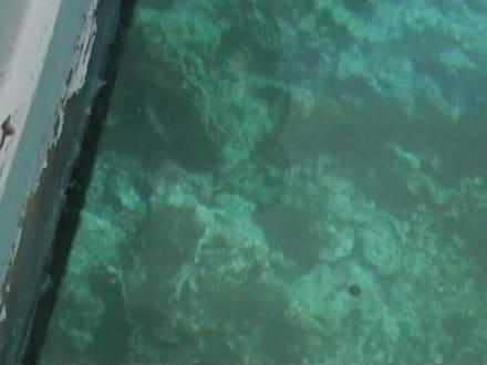 "im glasboot "" jutta "" - Giftun / Mahmya Inseln"